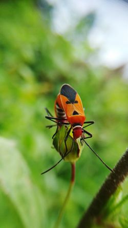 couple EyeEm Selects Flower Insect Perching Close-up Animal Themes Plant Ladybug Bug Animal Antenna