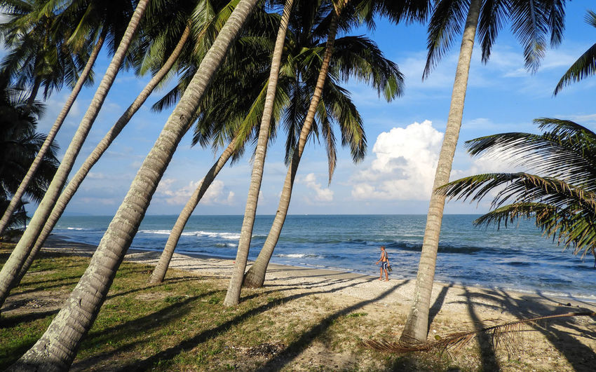 Khanom Thailand Beach Beauty In Nature Blue Branch Coconut Trees Day Growth Horizon Over Water Nature Outdoors Palm Tree Sand Scenics Sea Sky Sunlight Tranquil Scene Tranquility Tree Tree Trunk Water