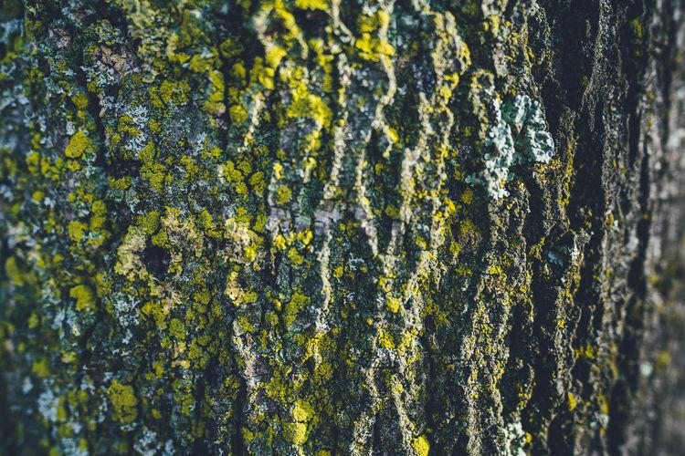 Full frame shot of moss growing on tree trunk