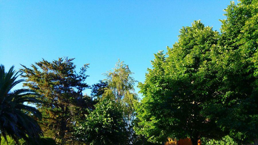 Garden Trees Plants 🌱 Plant Green Linden Tilos Blue Sky Blue Fresh Pure Pure Air Countryside Farm Life Life Cool Nature
