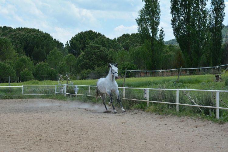 Horse running at ranch against trees