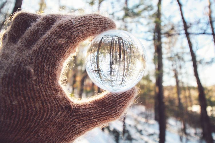 Frigid Forest Sunlight Massachusetts New England  Winter Natural Light Hands Nature Collection Trees Reflection Lensball EyeEmNewHere Forest Outdoors Focus On Foreground Tree Close-up No People Outdoors Day Nature
