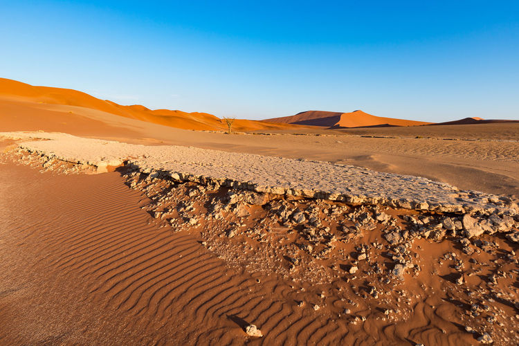 Sossusvlei Namibia, travel destination in Africa. Sand Dunes and clay salt pan with acacia trees, Namib Naukluft National Park, Namib desert. Keywords: namibia, sossusvlei, Sand Dune, desert, ridge, Travel Destinations, namib naukluft national park, sesriem, dunes, adventure, exploration, wind, arid, dune, ripple, wave, drought, hot, climate change, discovery, attraction, curves, background, namib, shape, sand, pattern, rippled, striped, remote, Famous Place, africa, barren, dry, valley, solitude, Landscape, unesco, Scenics, freedom, panoramic, Nature, outdoors, nobody, wide-angle, lifeless, majestic Animal Themes Arid Climate Beauty In Nature Clear Sky Day Desert Drought Landscape Mammal Nature No People Outdoors Physical Geography Sand Sand Dune Scenics Sky Sunlight Tranquil Scene Tranquility