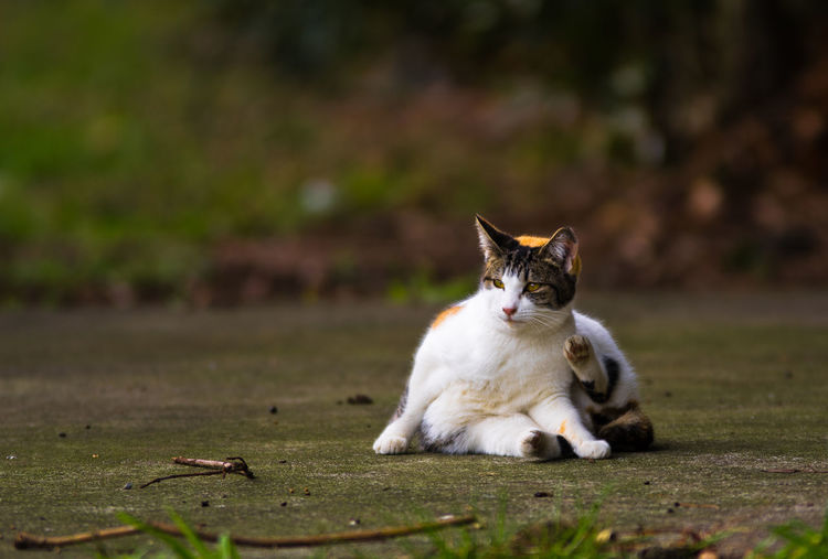 Cat relaxing on footpath