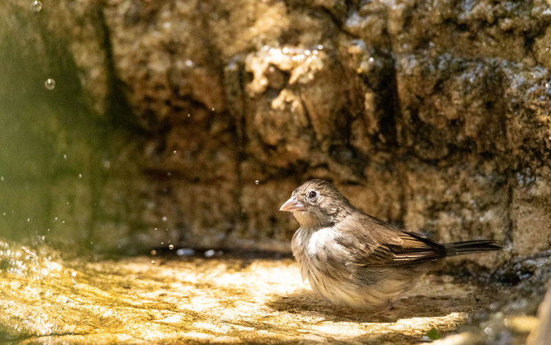 Side view of a bird on rock