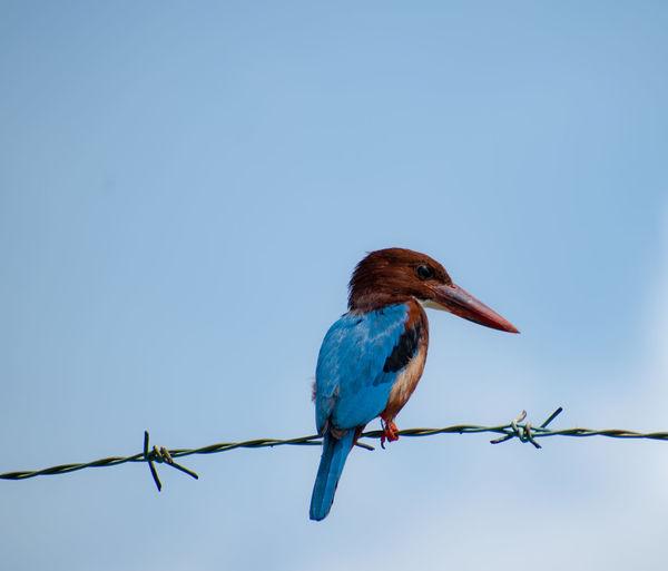 Animal Sky Bird