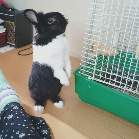 うさぎ Rabbit 🐇 Pets Standing