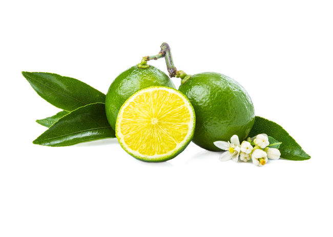 Background Backgrounds Citrus Fruit Close-up Flower Food Food And Drink Freshness Fruit Green Color Healthy Eating Japan Leaf Lime Lime, Organic Studio Shot Tree Tropical Tropical Climate White Background White,
