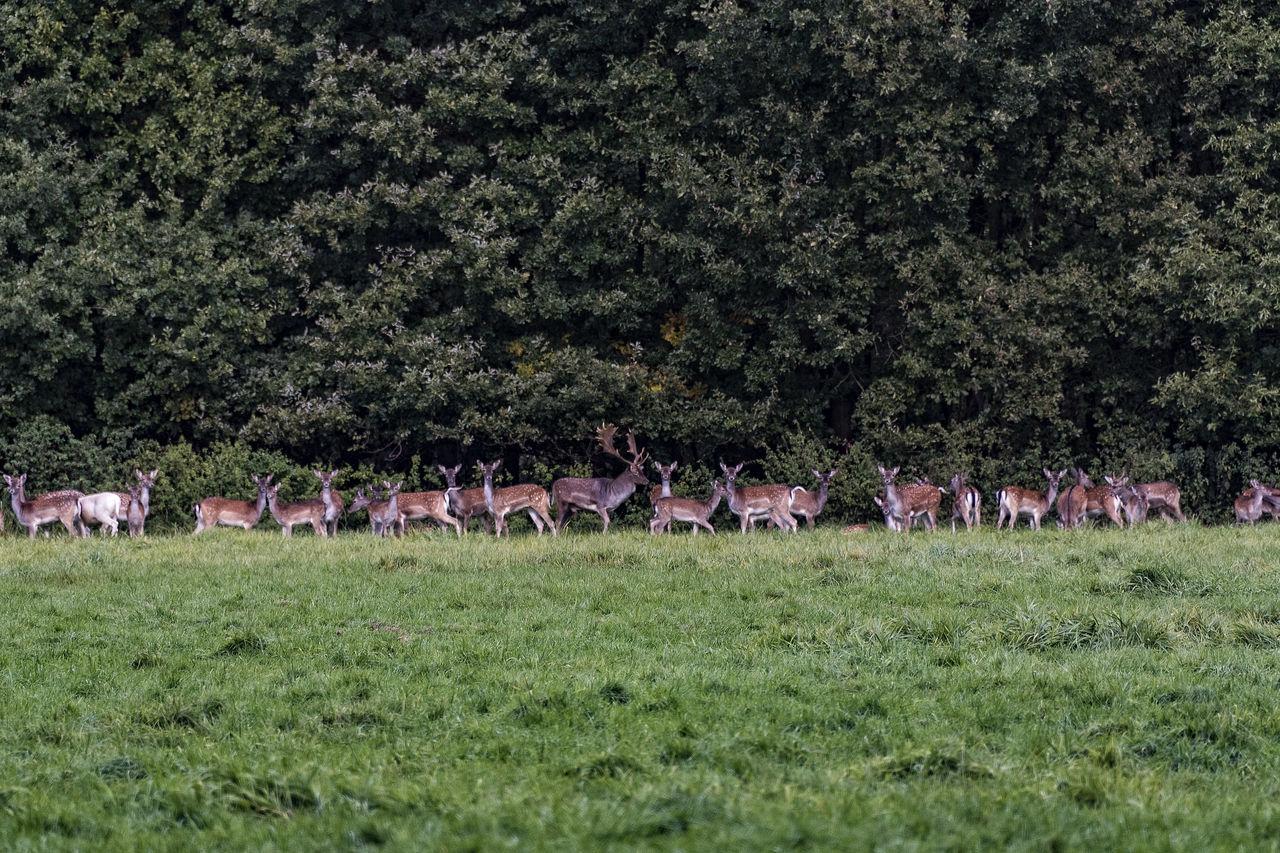 Herd of deer standing on grassy field in forest