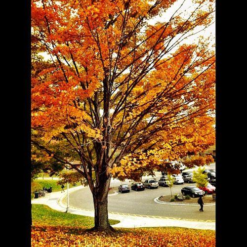 Love autumn :)