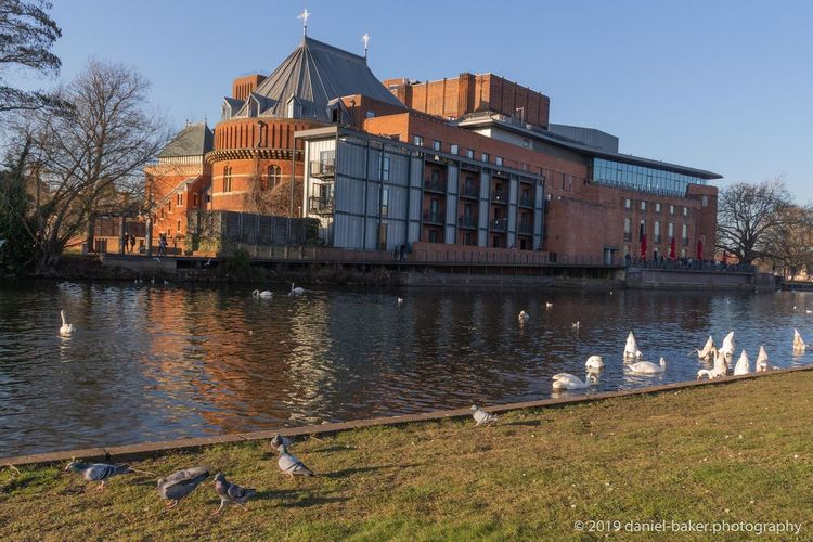 Building Bird Building Exterior Water Architecture Royal Shakespeare Theatre Built Structure Reflection Duck Swan River