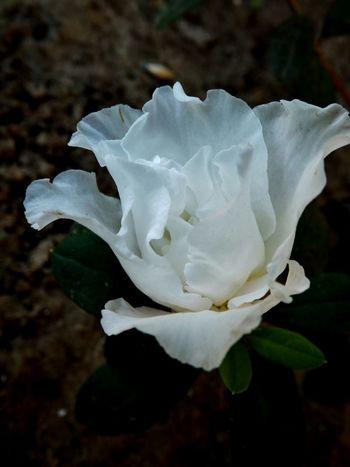 Flower Of The Day  EyeEm Best Shots - Flowers Meu Jardim