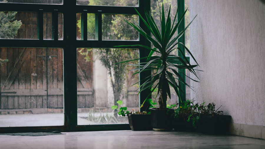 Potted Plants By Wall