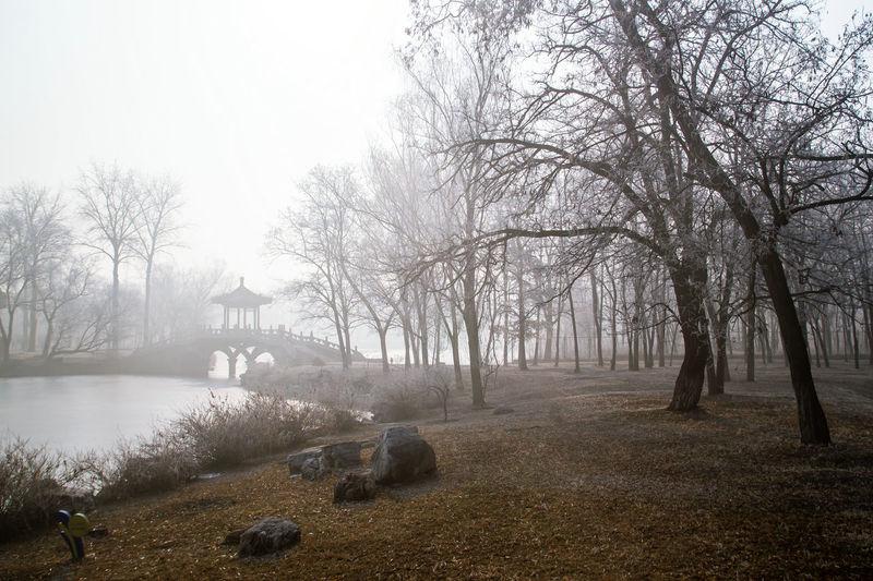Tree Water Fog Autumn Winter Sky Landscape