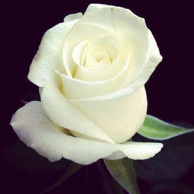 Esta flor para todas esas bellas flores.que hoy por hoy son mis amigas no importando la distancia ni el ideoma, que dios me las bendiga.