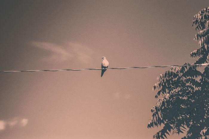 Beauty In Nature Bird Bird On A Wire Bird Perching Low Angle View Nature Perched Perched Bird Pigeon Power Line  Sky Tree