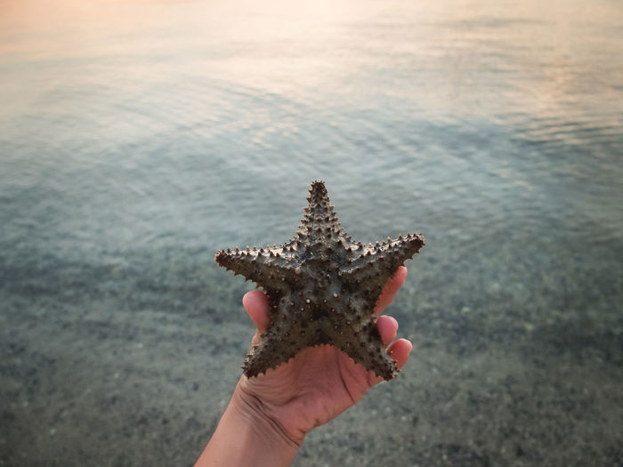 Cropped image of hand holding starfish against sea