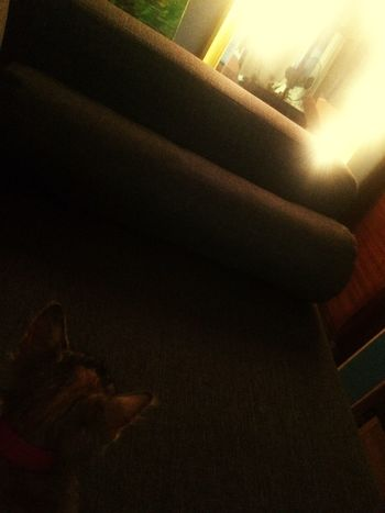 Nightshot Relaxing Lights Pets Indoors  Real People One Person Sitting Day Close-up People