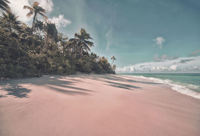 Beach Beauty In Nature Cloud - Sky Day Fiji Fiji Islands Horizon Over Water Nature No People Outdoors Palm Tree Sand Scenics Sea Sky Tranquil Scene Tranquility Travel Destinations Travel Photography Tree Water