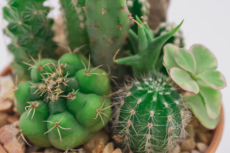 Beauty In Nature Cactus Close-up Day Focus On Foreground Freshness Green Color Growth Leaf Nature No People Outdoors Plant Plant Part Potted Plant Selective Focus Sharp Spiked Spiky Succulent Plant Thorn