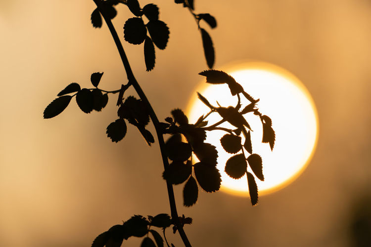 Abendsonne Beauty In Nature Close-up Focus On Foreground Leaf Nature No People Orange Color Outdoors Plant Plant Part Silhouette Sky Sun Sunlight Sunset Tranquility