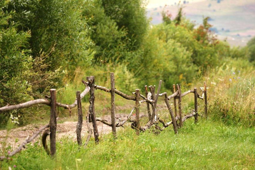Fence Rustic Beauty Landscape Fence Tree Tranquil Scene Bushes Countryside Tranquility Grass Nature Green