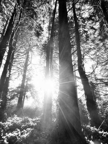 trees and sunrays Trees Day Plants Park Nature_collection Tranquility Tree Branch Forest Tree Trunk Sunlight Tree Area WoodLand Sky Sunrays Woods