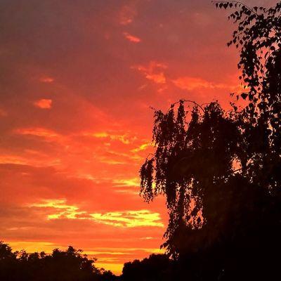 I've missed the sunset today :( Sunset Tgif_nature Sunsetlovers Sunsetporn Viewmysunset Lumia IGDaily WindowsPhonePhotography Instagrammers Lumia930 WeLoveLumia Super_photosunsets Rsa_sky Tgif_sunset Kalocsa Sunsetporn Instamagyarorszag Sunset_stream Mik