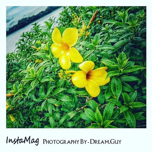 """Actually , I don't know the name of this flower . That's why . I will name that is """" Yellow_Flower """" ... Photography By Dream_Guy"""