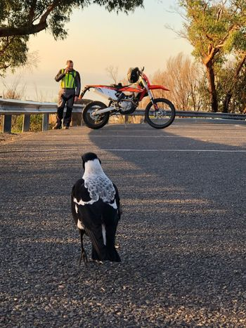 Right place, right time Curiosity Opportunistic Images On The Go Dusk Motorcycle Native Birds Real People Land Vehicle Mode Of Transportation Full Length Road Bicycle Nature