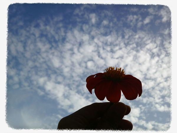 My beautiful sky Taking Photos Beautiful Flowers Sky Collection Looking Up