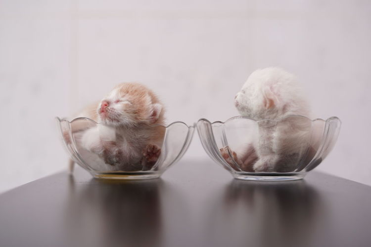 Close-up of a cat in glass on table