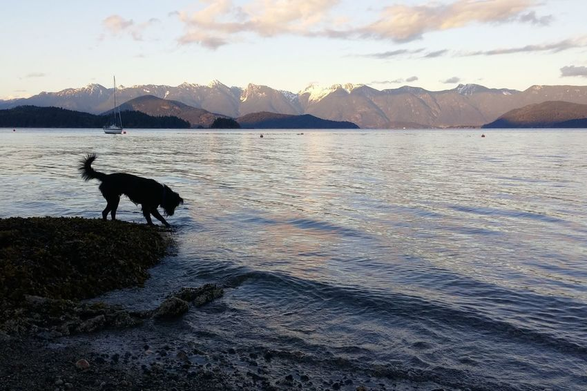 WestCoast BC, Canada EyeEmNewHere EyeEm Gallery Hopkins Cute Pets Beach Ocean Cute Winterbeach Water Silhouette Dog Pets Mountain One Animal Water Animal Domestic Animals Animal Themes Cold Temperature Outdoors Nature Mountain Range Snow Landscape Beauty In Nature No People Winter Sky Summer Exploratorium