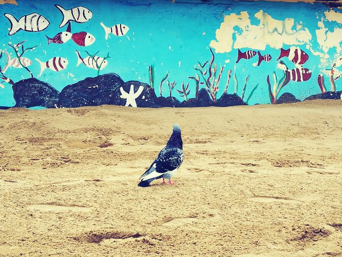 Bird No People Animal Themes Day Outdoors Pigeon Pigeonslife Beach Beachphotography Beachlife Beachtime♥♥ Saturday SPAIN Where is my mind? Where Am I? Beauty In Nature Thinking EyEmNewHere