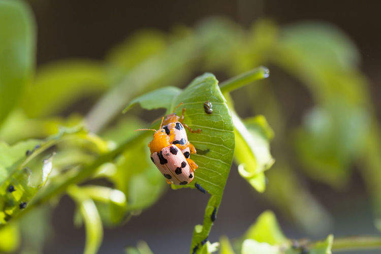 Animal Themes Animal Wildlife Animals In The Wild Beauty In Nature Close-up Day Insect Nature No People One Animal Outdoors
