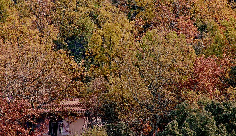 My little French house in the woods Full Frame Backgrounds No People Multi Colored Pattern Outdoors Day Close-up Abundance Beauty In Nature Nature Built Structure