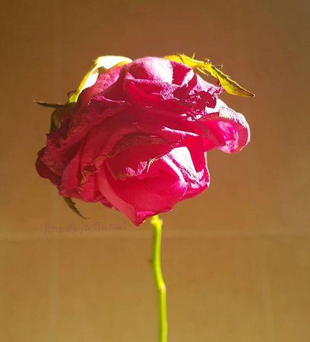 """جَمَال الرُوح هُوَ الشّيء الوَحِيد الذِي لا يَستَطِيعُ الزّمَان أن ينَال مِنه"""" مساء_النور مساء مساكم_ورد ورد ورود تصويري  تصويري_عدستي تصويري_المتواضع صورة_من_تصويري صورة_اليوم صورة_وتعليق Night Nice Goodnight GoodTimes Photoshoot Photooftheday Photo Fottuto Flower Amazing هشتاقات_انستقرام هشتاقاتي Instagood"""