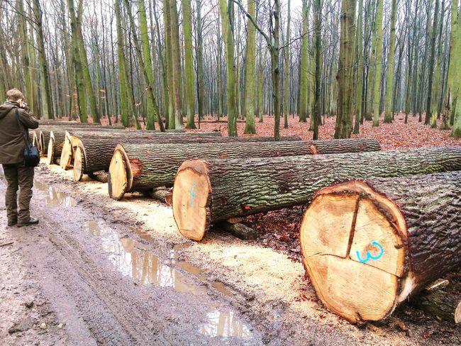 Tree Forestry Industry Forestry Forest Photography Forestwalk Lumber Industry Lumber Timber Oak Oakwood Quercus Krotoszyn Poland Polskajestpiekna Polska Nature FirstEyeEmPic First Eyeem Photo Wood - Material Woodpile Wood