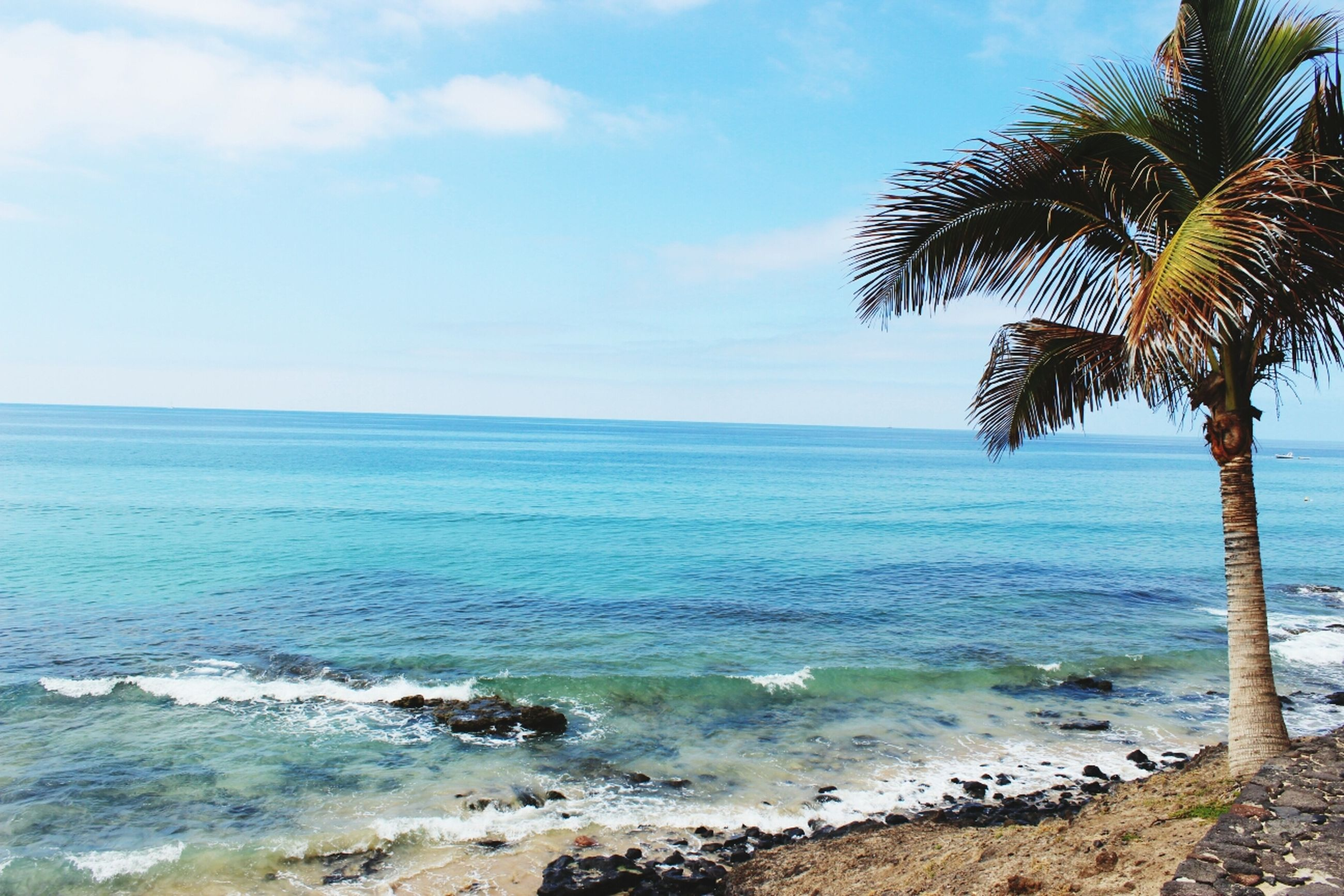sea, beach, water, horizon over water, tranquility, tranquil scene, scenics, palm tree, sky, shore, beauty in nature, tree, nature, sand, idyllic, coastline, wave, day, outdoors, non-urban scene