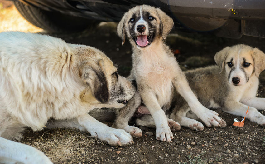 Animal Themes Cleaning Up  Close-up Day Dog Domestic Animals Mammal Mother Love No People Outdoors Pets Puppy Love Togetherness Love Is Love