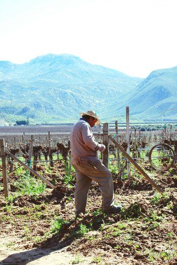 Valle De Guadalupe Ensenada B.c. Ensenada Viñedo Vineyards