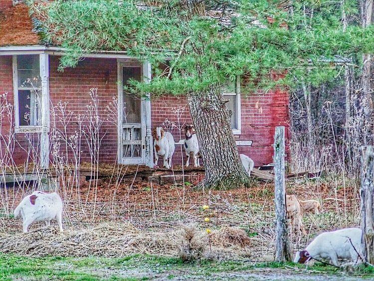 Down On The Farm Animal Farm Tennessee