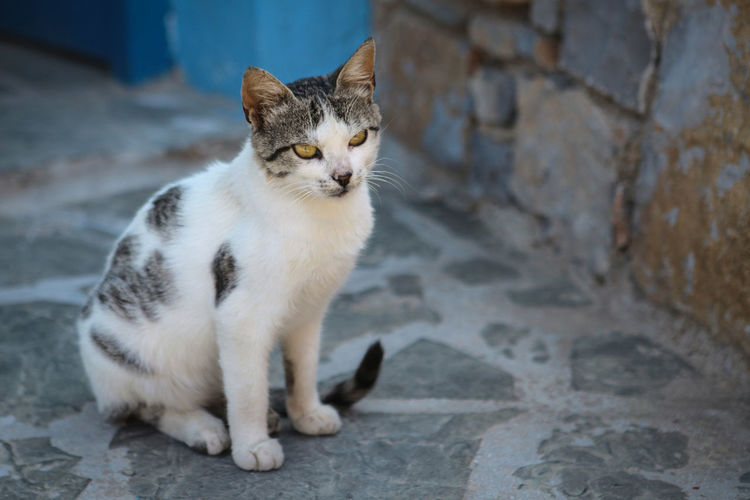 Greek cat sitting in front of a wall Cat Domestic Pets Domestic Cat Domestic Animals Mammal Feline One Animal No People Portrait Sitting Focus On Foreground Whisker Looking At Camera Day Relaxation Animal Eye Greece