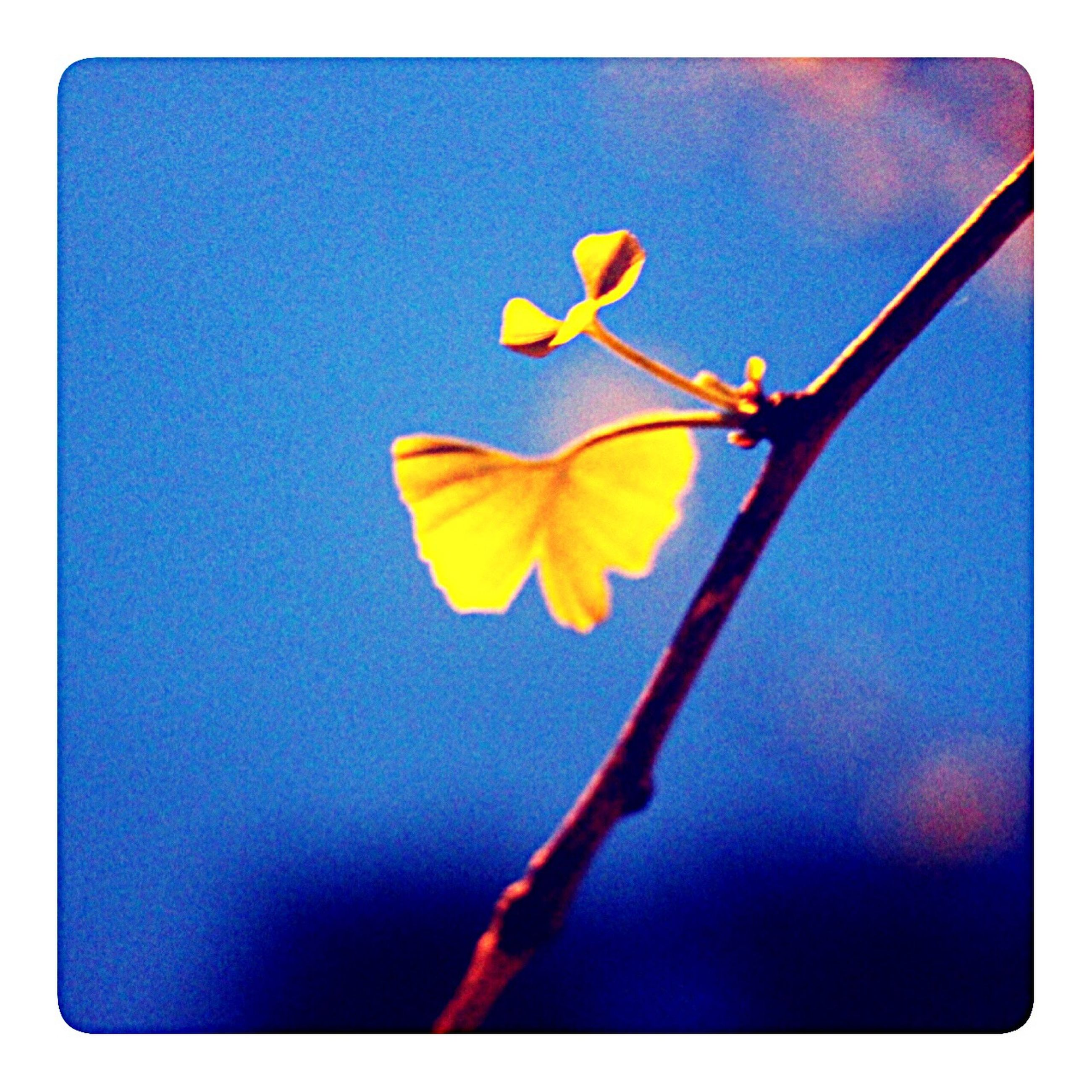 transfer print, auto post production filter, flower, blue, growth, fragility, nature, stem, yellow, beauty in nature, close-up, focus on foreground, freshness, plant, sky, outdoors, low angle view, petal, no people, day