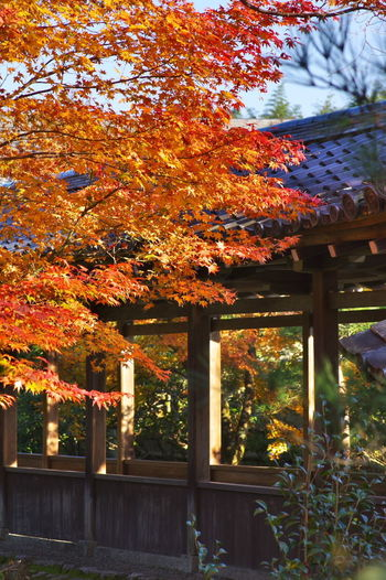 天龍寺 紅葉2016 紅葉 紅葉🍁 Maple Leaf Nature Beauty In Nature Autumn Nature Photography Nature_collection Nature
