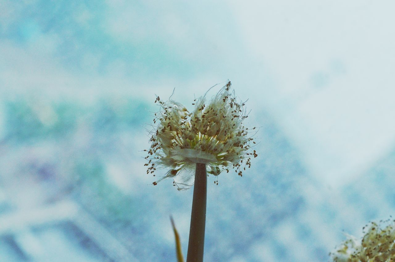 flower, nature, growth, fragility, stem, plant, beauty in nature, close-up, focus on foreground, day, flower head, freshness, outdoors, no people, sky
