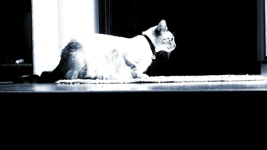 Taking Photos Cat My Cat Cute Pets Pets Blue Shadows