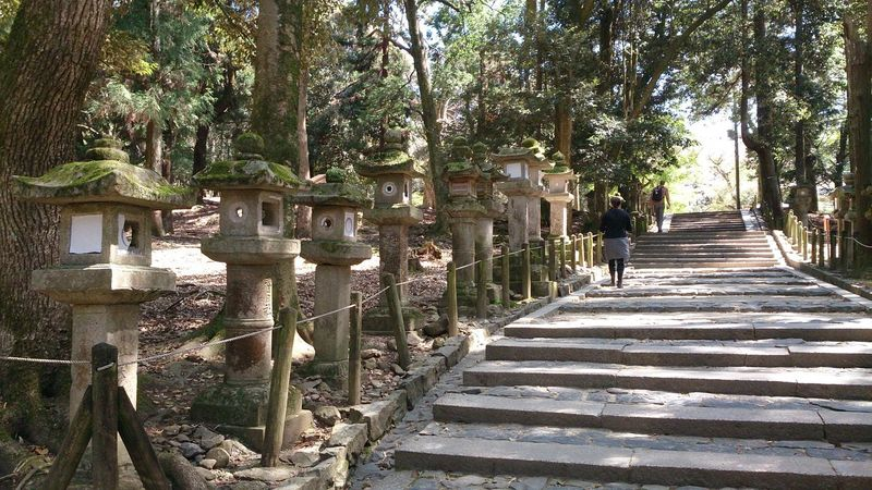 Culture Forest Japan Nara Path Stone Lantern Temple Traditional Ultimate Japan