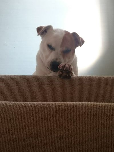 Dog Pets Cute Pets Stairs