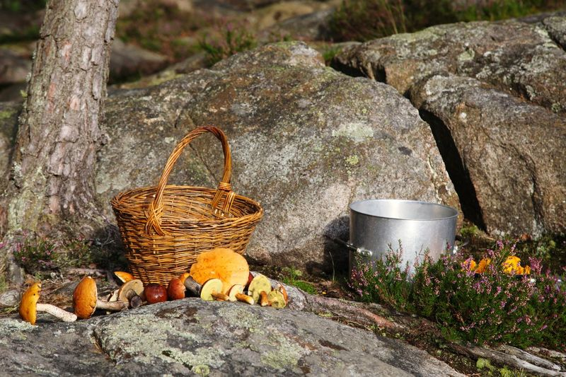 amazing Sweden Stone Forest Heather Pan Moments Backgrounds Autumn Summer Wicker Wickerwork Chantarelle Boletus Mushroom Food Food And Drink Colorful No People Outdoors Day Nature Tree Stump Close-up